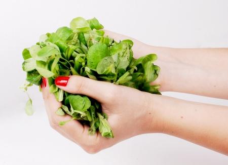 Hände halten Vogerlsalat